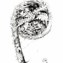 lo-res-unfurling-fern